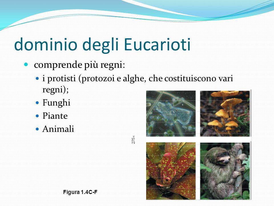 dominio degli Eucarioti