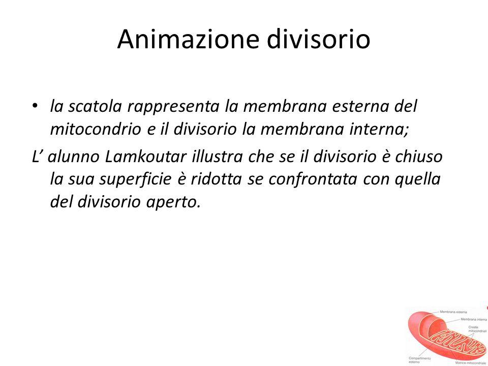Animazione divisorio la scatola rappresenta la membrana esterna del mitocondrio e il divisorio la membrana interna;