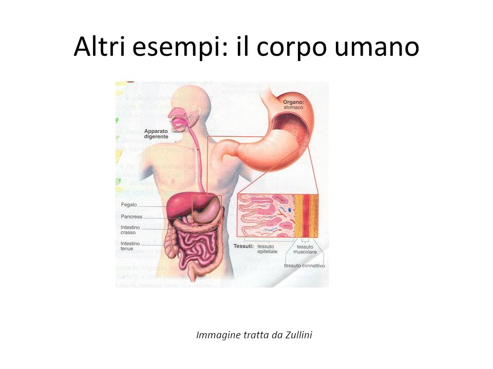 Altri esempi: il corpo umano