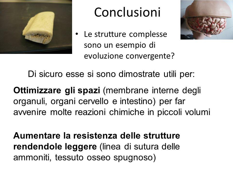 Conclusioni Le strutture complesse sono un esempio di evoluzione convergente Di sicuro esse si sono dimostrate utili per:
