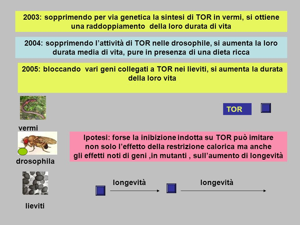 2003: sopprimendo per via genetica la sintesi di TOR in vermi, si ottiene una raddoppiamento della loro durata di vita