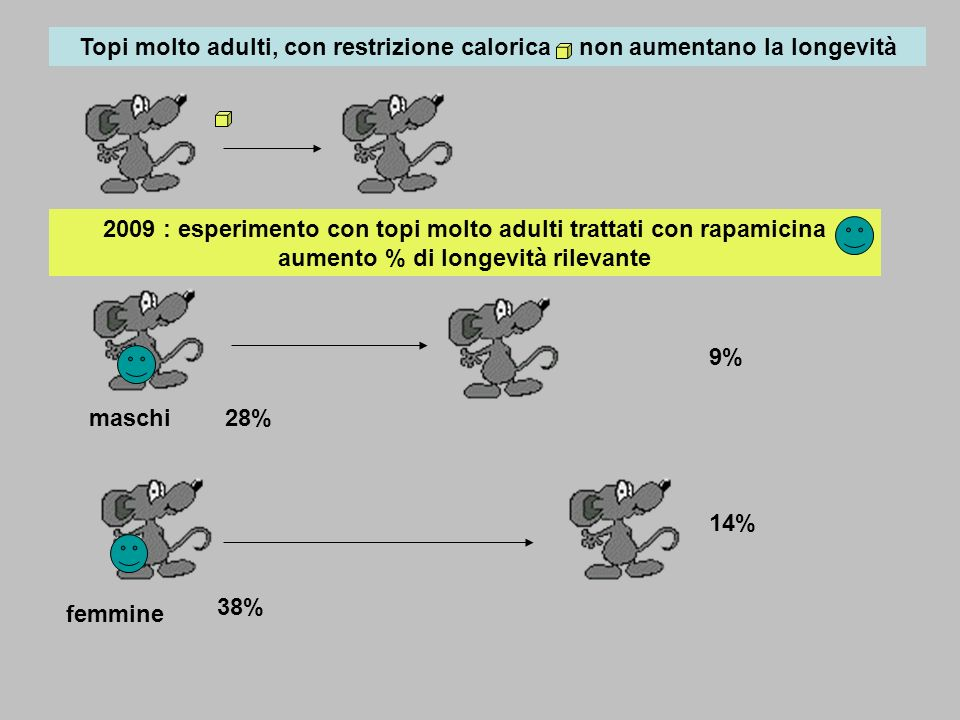 Topi molto adulti, con restrizione calorica , non aumentano la longevità