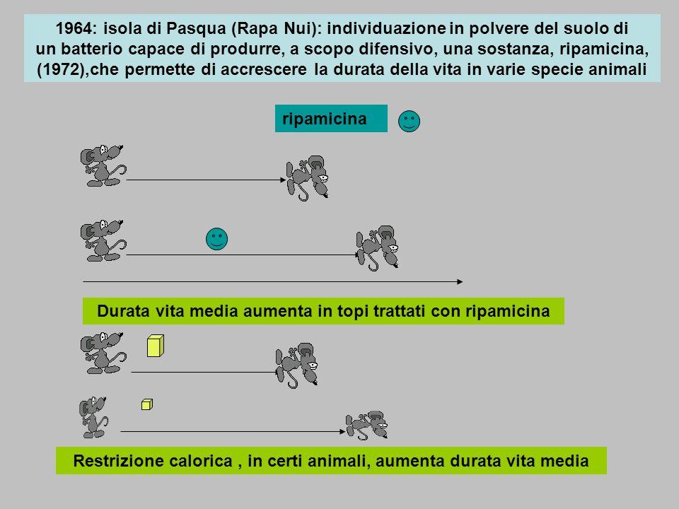 Durata vita media aumenta in topi trattati con ripamicina