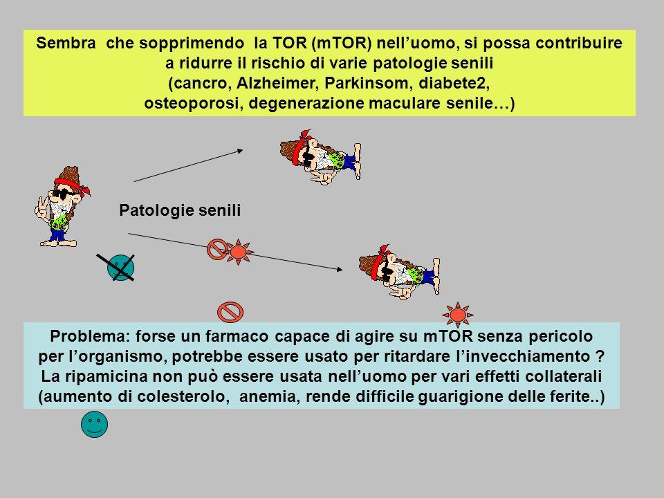 Sembra che sopprimendo la TOR (mTOR) nell'uomo, si possa contribuire a ridurre il rischio di varie patologie senili (cancro, Alzheimer, Parkinsom, diabete2, osteoporosi, degenerazione maculare senile…)