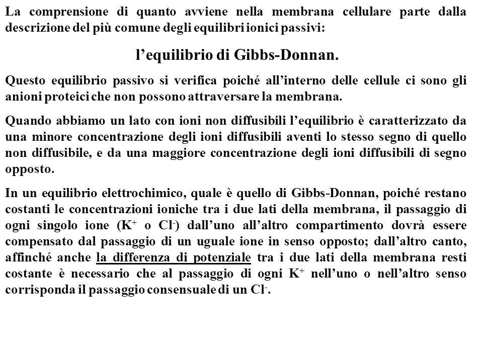 l'equilibrio di Gibbs-Donnan.