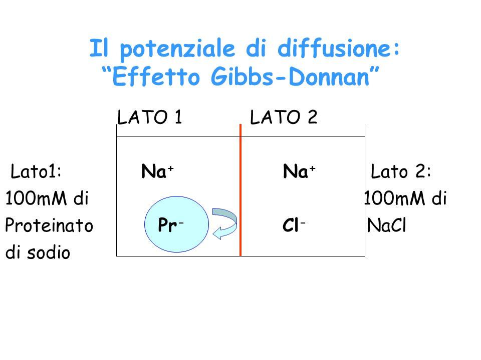 Il potenziale di diffusione: Effetto Gibbs-Donnan