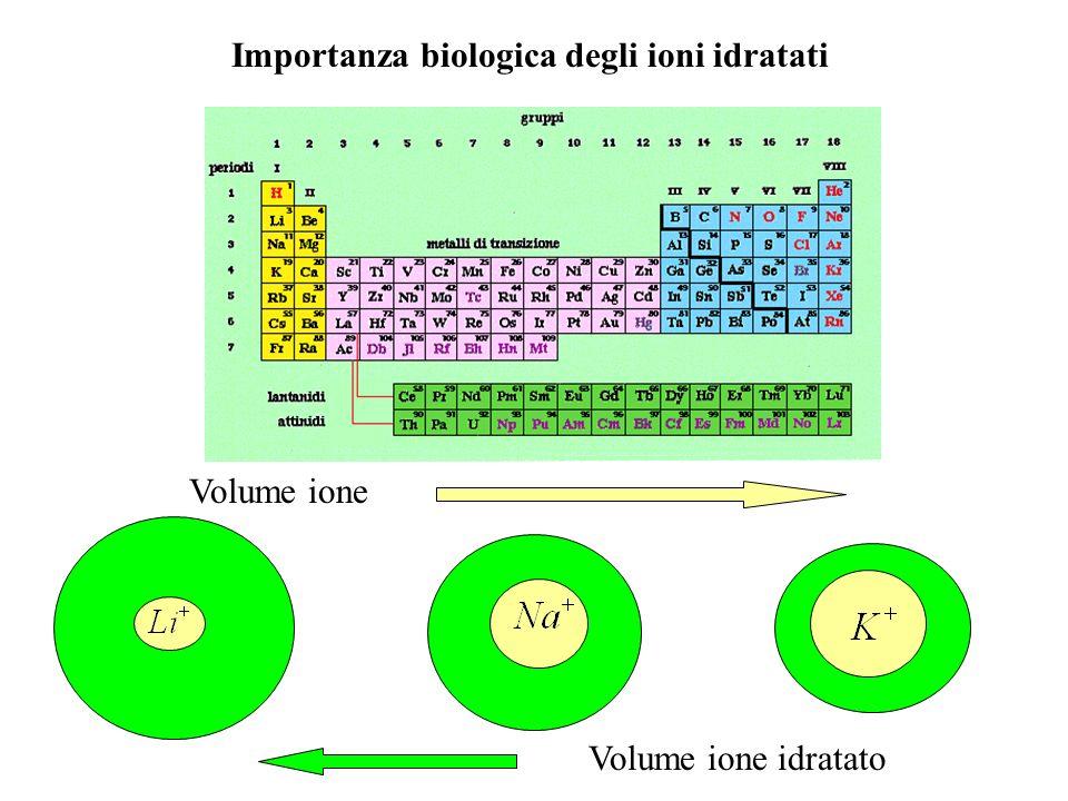 Importanza biologica degli ioni idratati