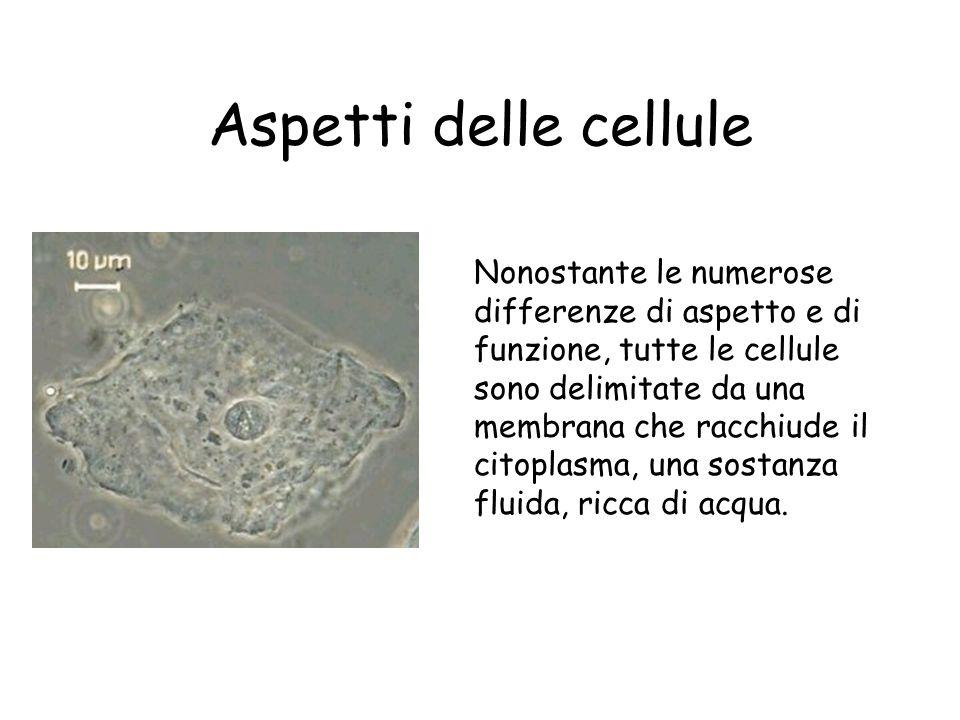 Aspetti delle cellule