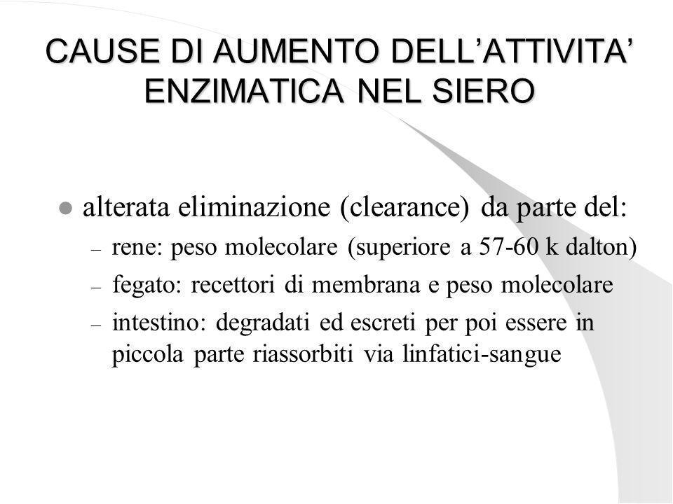 CAUSE DI AUMENTO DELL'ATTIVITA' ENZIMATICA NEL SIERO