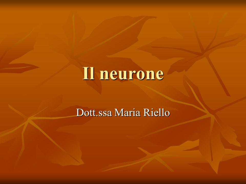 Il neurone Dott.ssa Maria Riello