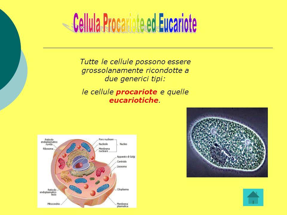 Cellula Procariote ed Eucariote x