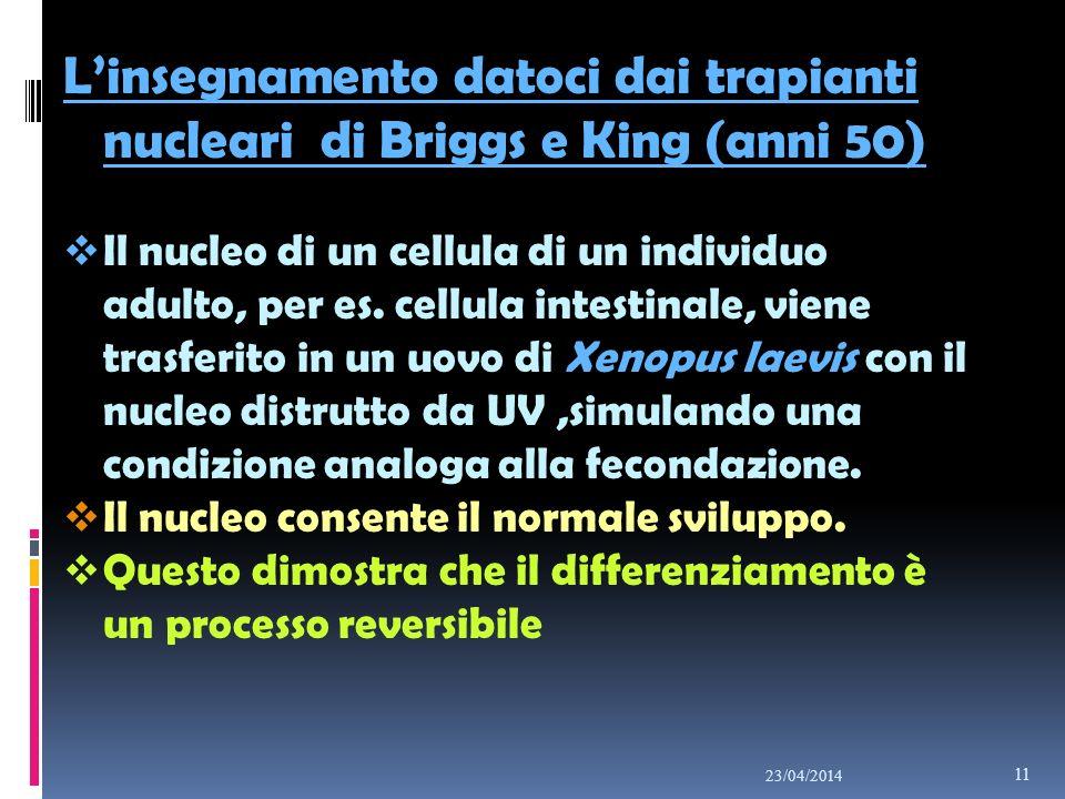 L'insegnamento datoci dai trapianti nucleari di Briggs e King (anni 50)