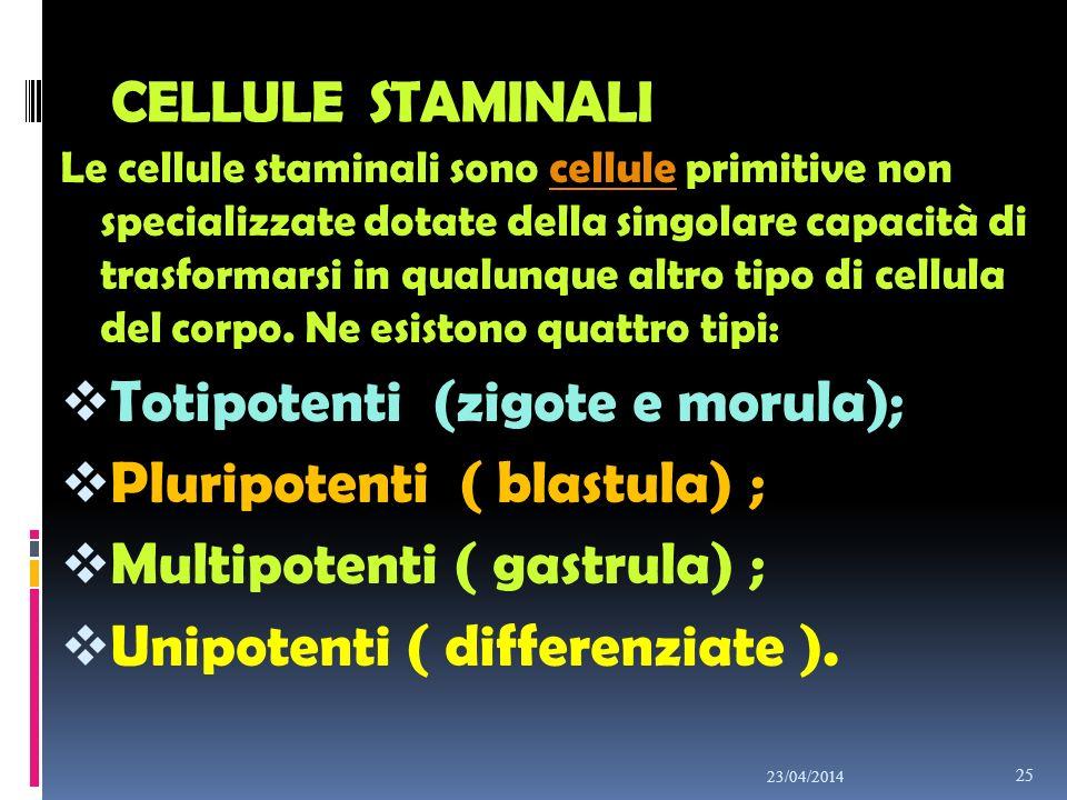 Totipotenti (zigote e morula); Pluripotenti ( blastula) ;