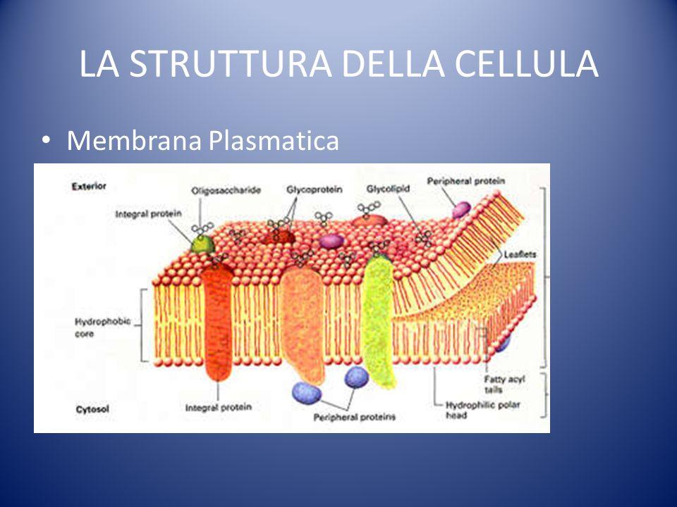LA STRUTTURA DELLA CELLULA