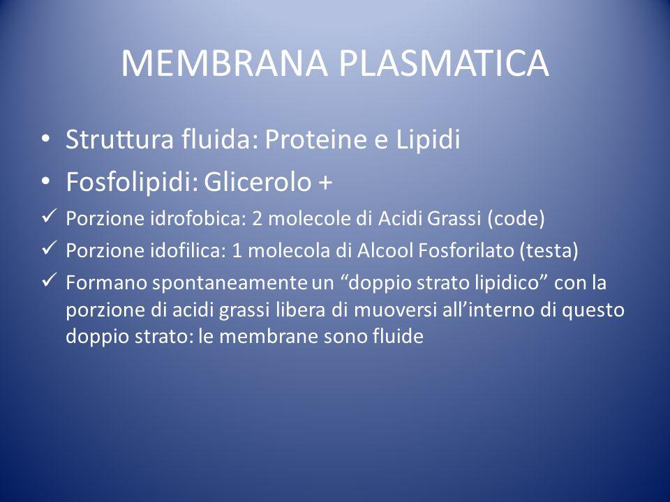 MEMBRANA PLASMATICA Struttura fluida: Proteine e Lipidi