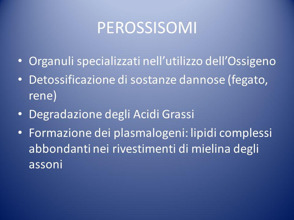 PEROSSISOMI Organuli specializzati nell'utilizzo dell'Ossigeno