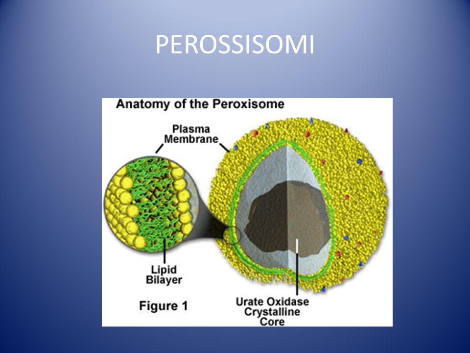 PEROSSISOMI