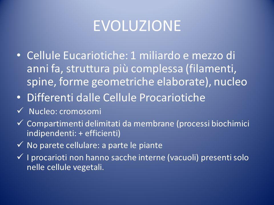 EVOLUZIONE Cellule Eucariotiche: 1 miliardo e mezzo di anni fa, struttura più complessa (filamenti, spine, forme geometriche elaborate), nucleo.