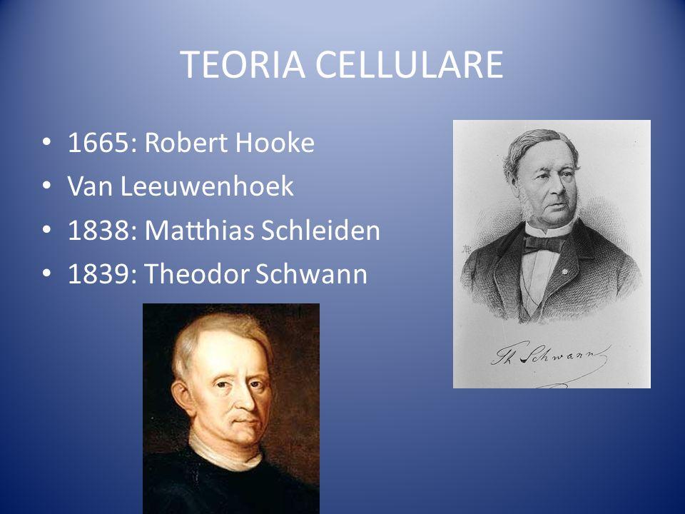 TEORIA CELLULARE 1665: Robert Hooke Van Leeuwenhoek