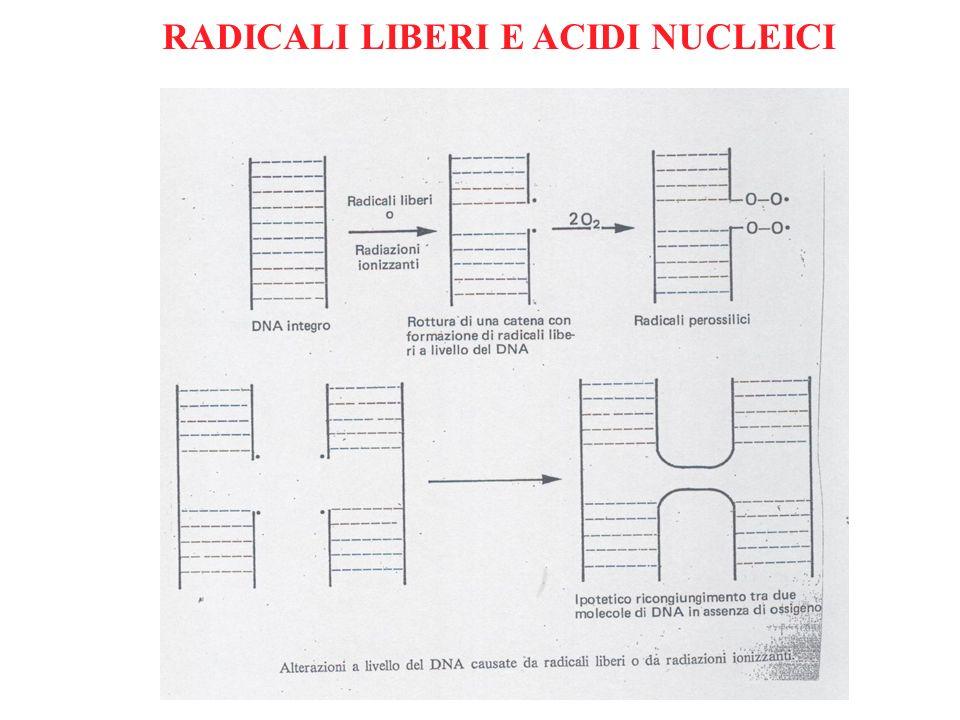 RADICALI LIBERI E ACIDI NUCLEICI
