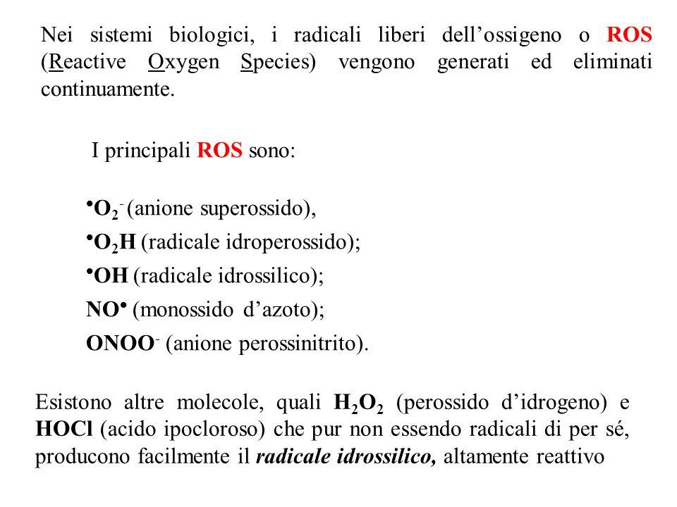 O2- (anione superossido), O2H (radicale idroperossido);