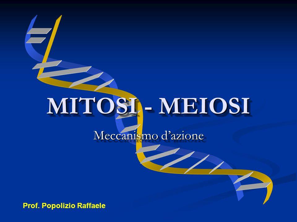 MITOSI - MEIOSI Meccanismo d'azione Prof. Popolizio Raffaele