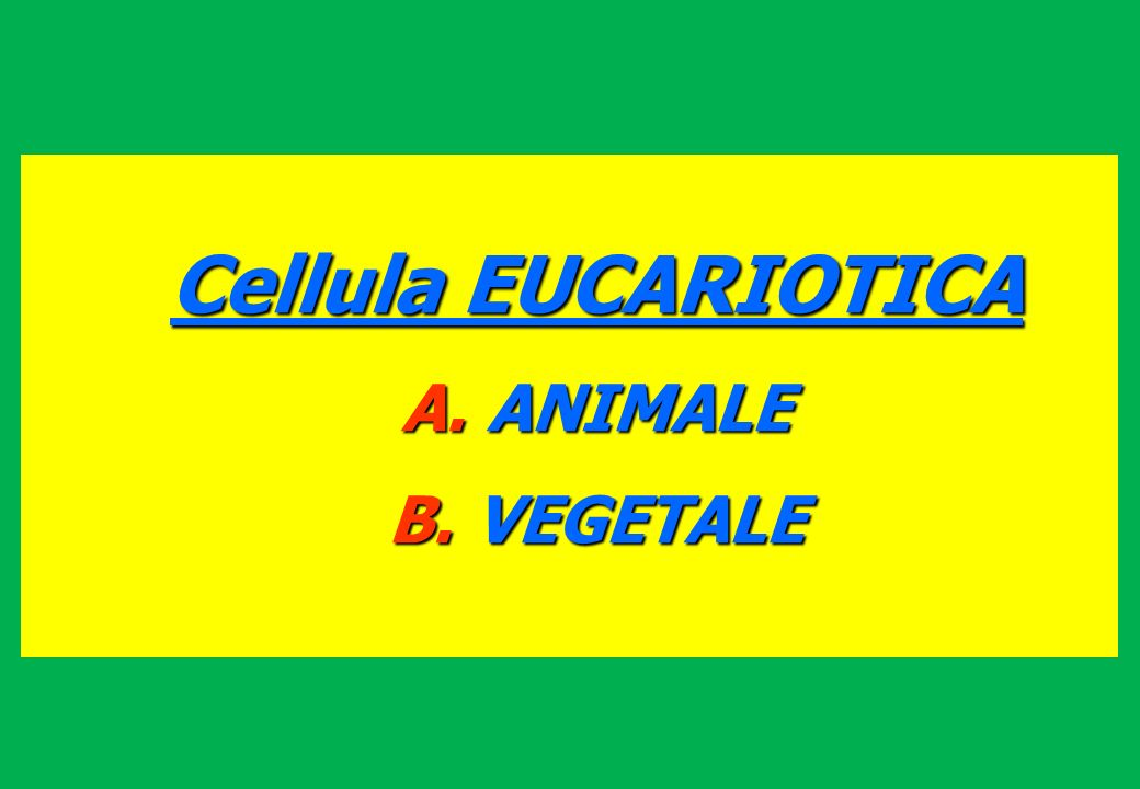Cellula EUCARIOTICA ANIMALE VEGETALE