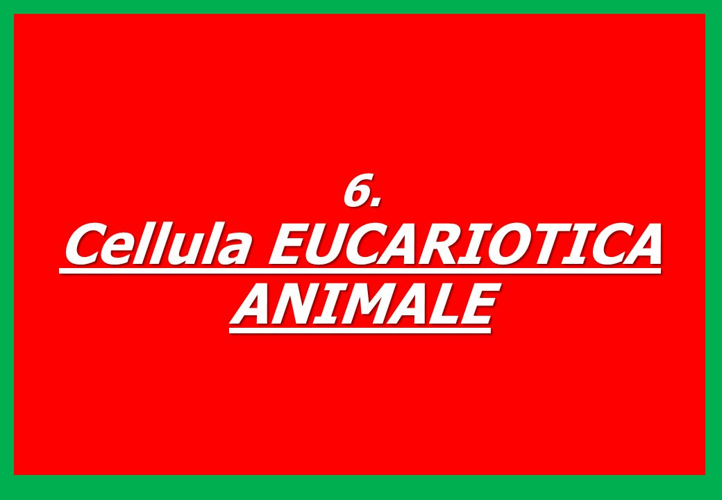 Cellula EUCARIOTICA ANIMALE