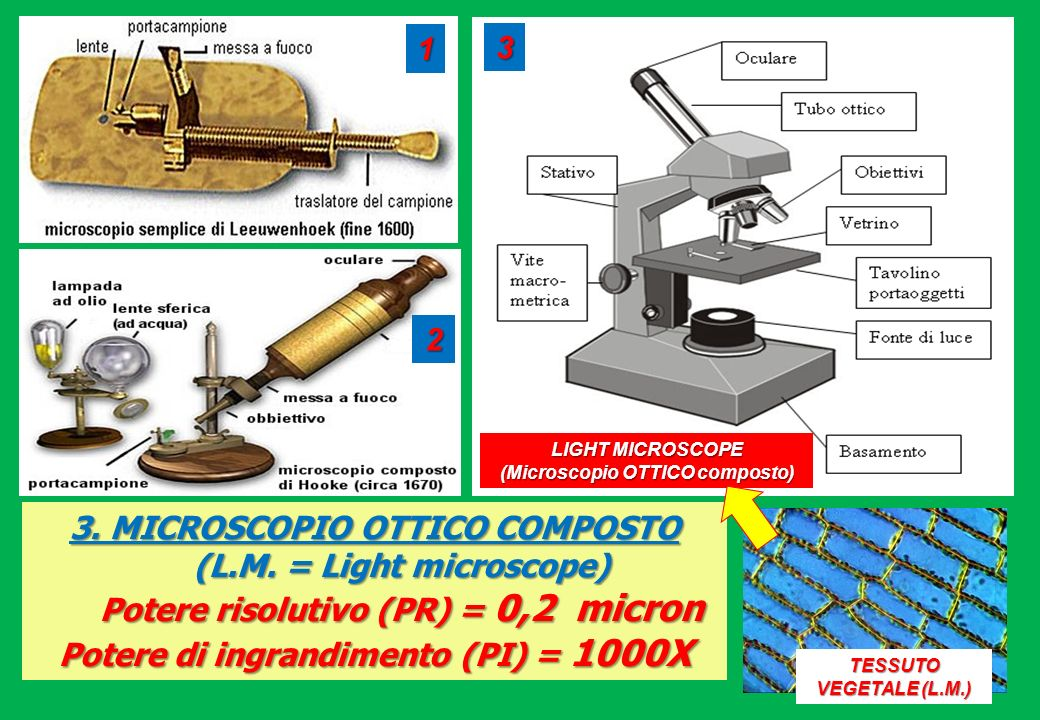 3. MICROSCOPIO OTTICO COMPOSTO (L.M. = Light microscope)