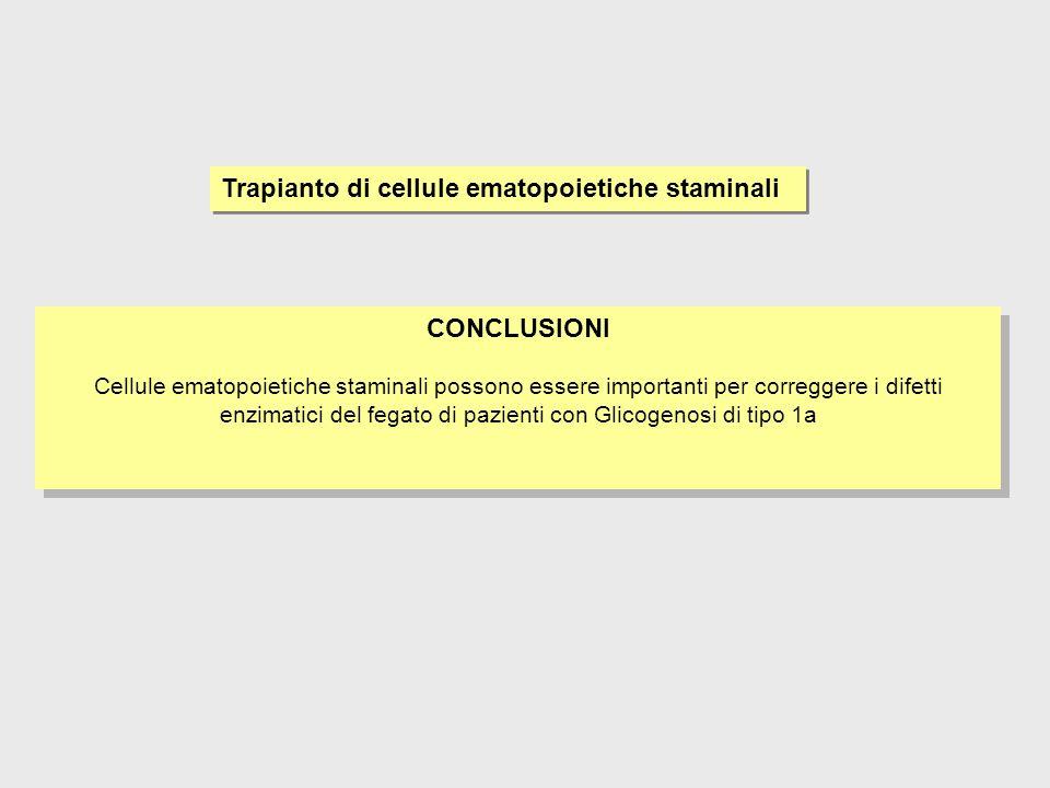 Trapianto di cellule ematopoietiche staminali