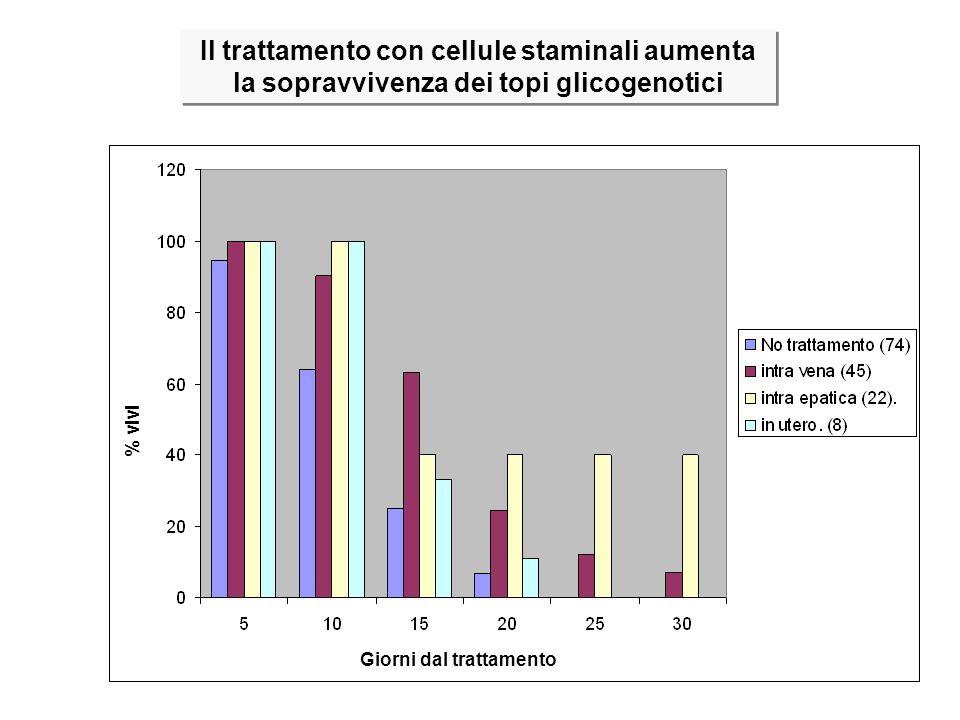 Il trattamento con cellule staminali aumenta la sopravvivenza dei topi glicogenotici