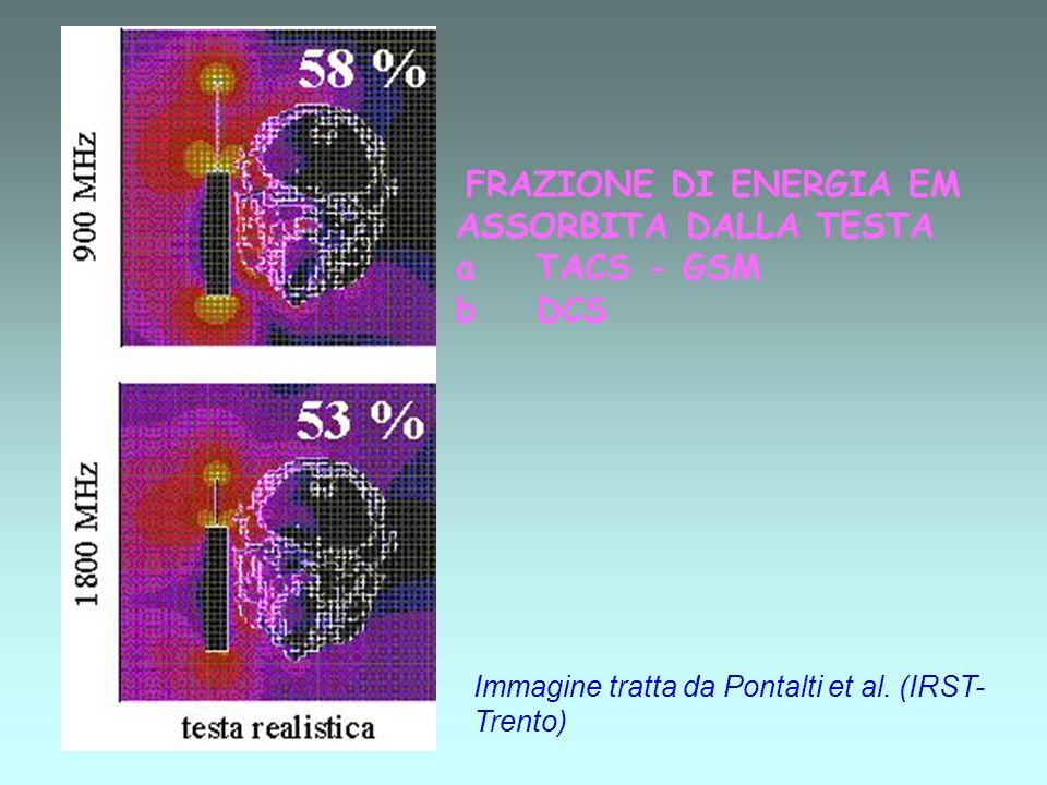 FRAZIONE DI ENERGIA EM ASSORBITA DALLA TESTA a TACS - GSM b DCS