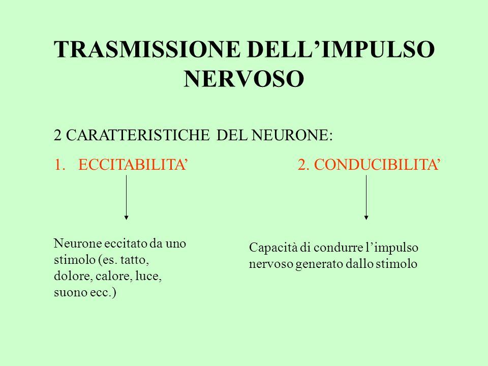 TRASMISSIONE DELL'IMPULSO NERVOSO