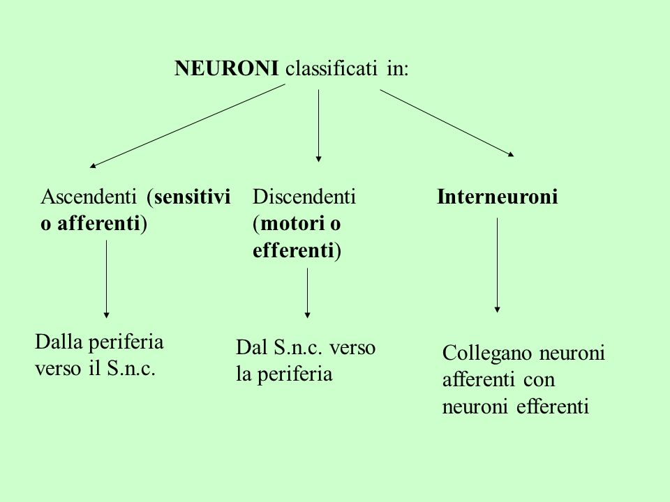 NEURONI classificati in: