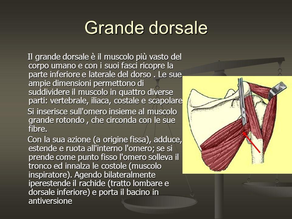 Grande dorsale