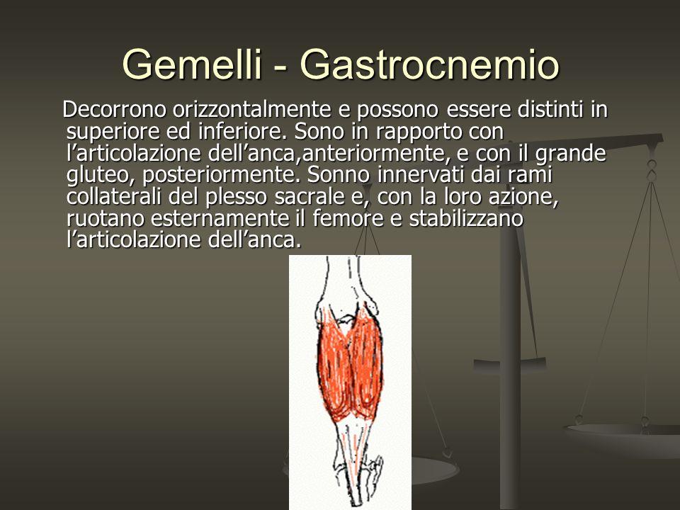 Gemelli - Gastrocnemio