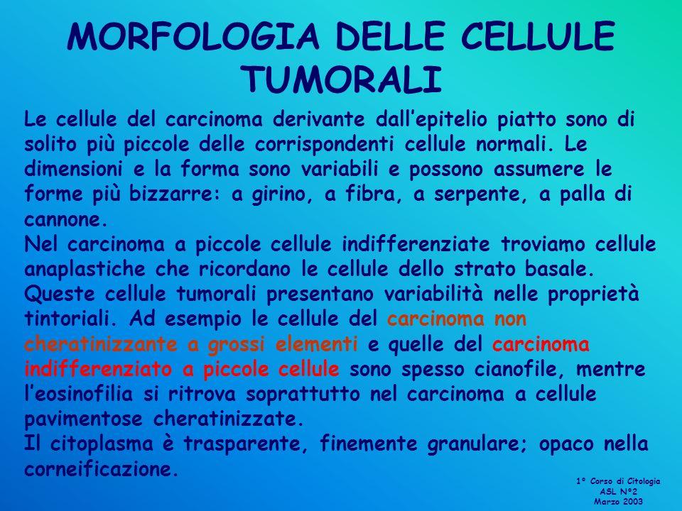 MORFOLOGIA DELLE CELLULE TUMORALI