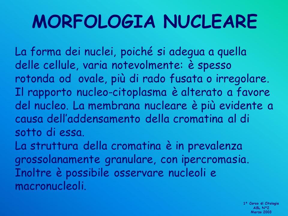 MORFOLOGIA NUCLEARE
