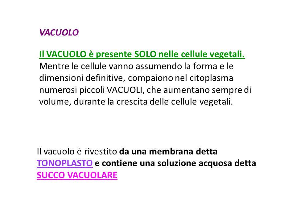 Il VACUOLO è presente SOLO nelle cellule vegetali.
