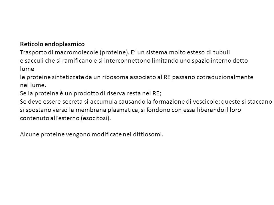Reticolo endoplasmico