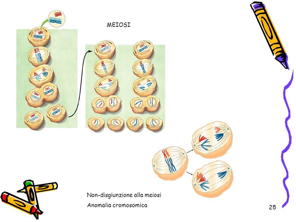MEIOSI Non-disgiunzione alla meiosi Anomalia cromosomica