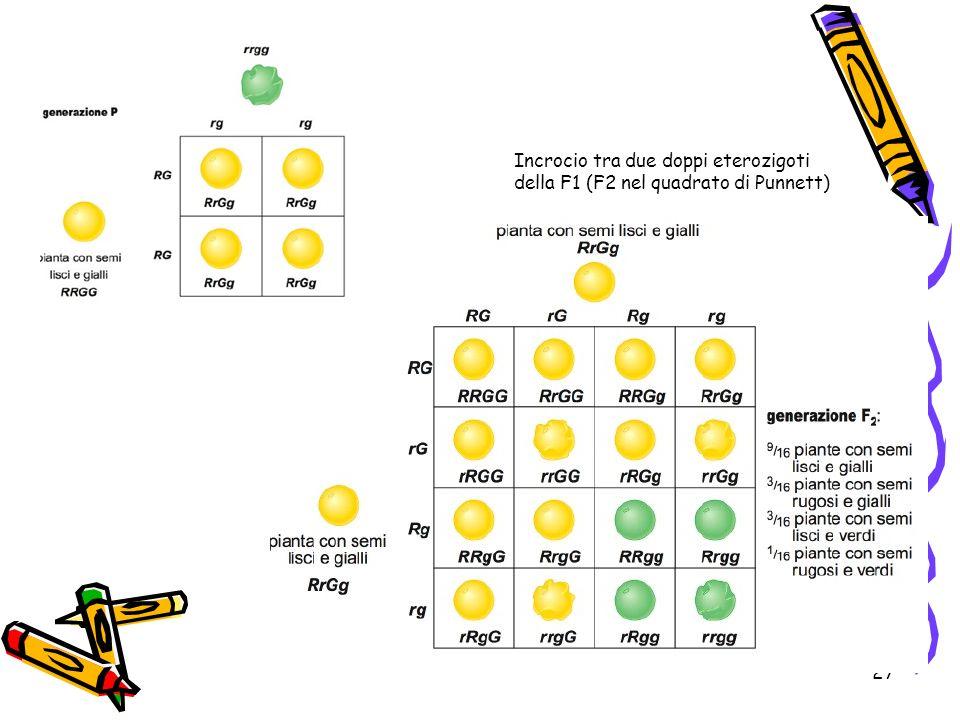 Incrocio tra due doppi eterozigoti della F1 (F2 nel quadrato di Punnett)