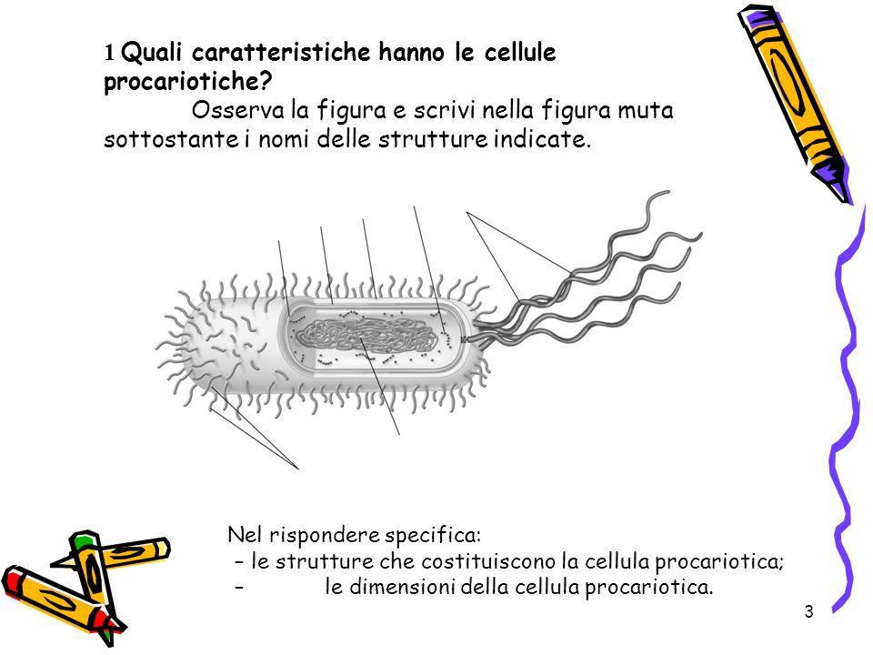 1 Quali caratteristiche hanno le cellule procariotiche