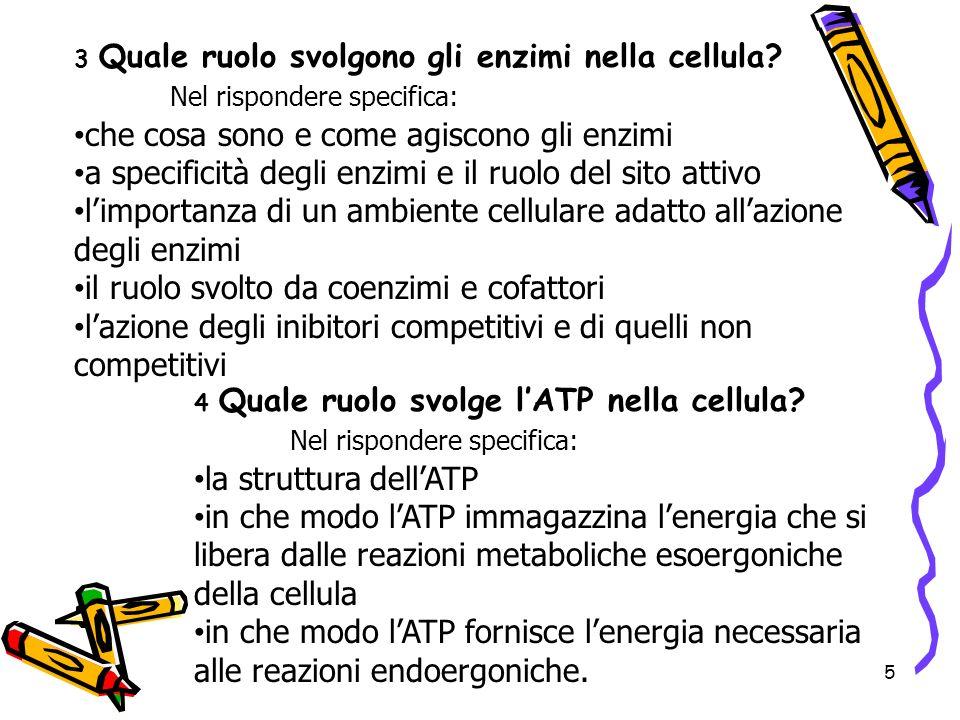 Nel rispondere specifica: che cosa sono e come agiscono gli enzimi