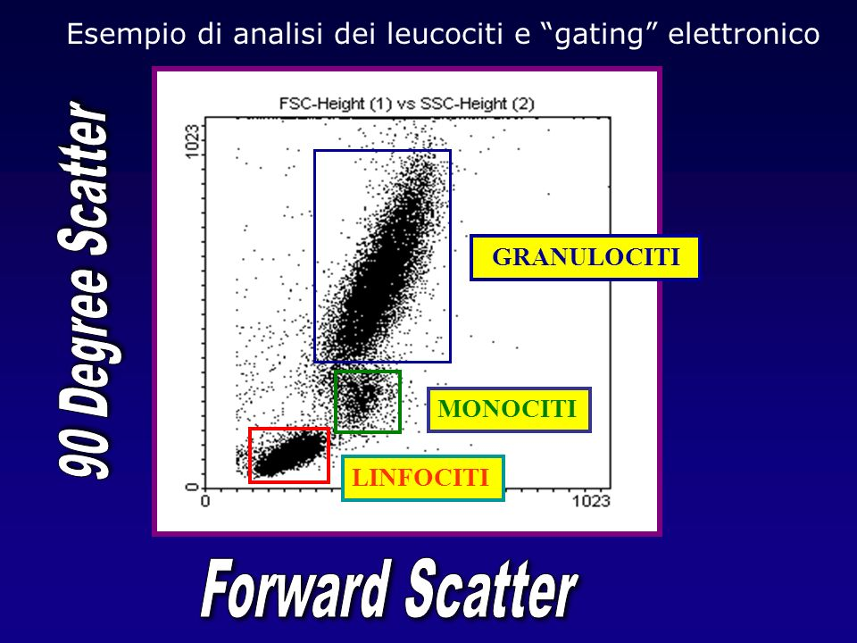 Esempio di analisi dei leucociti e gating elettronico