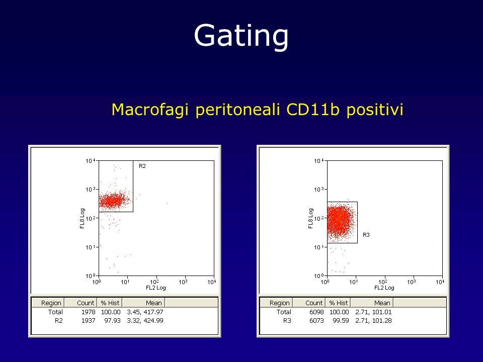 Macrofagi peritoneali CD11b positivi