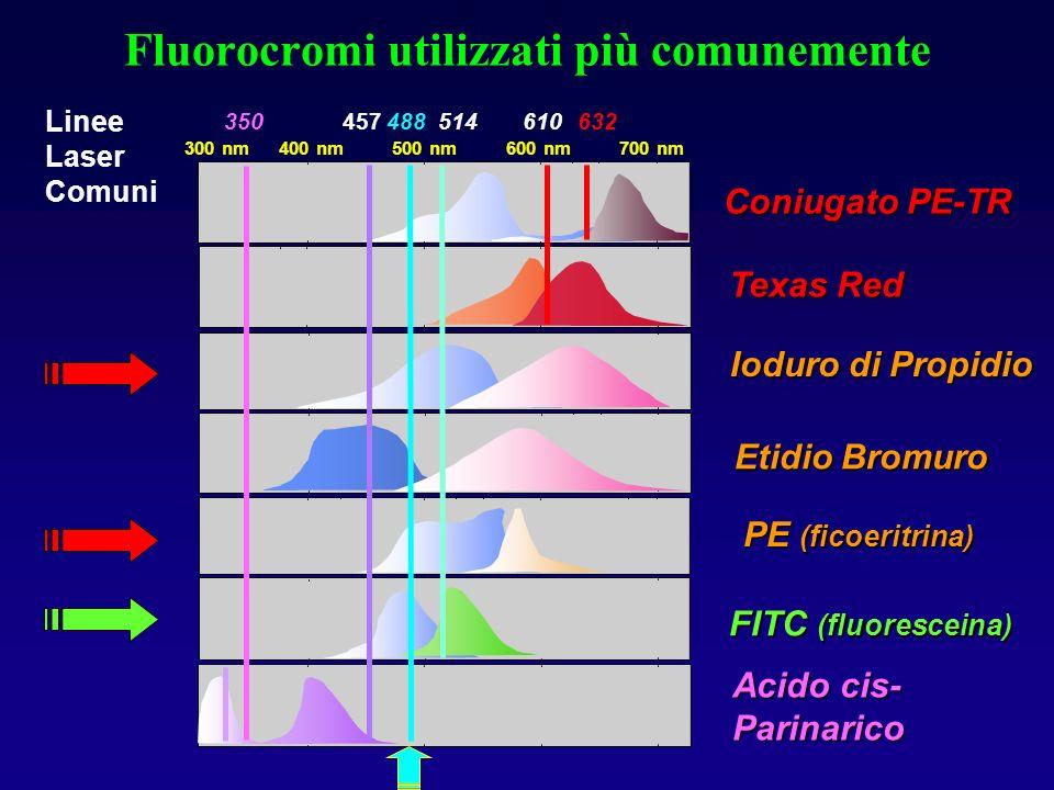 Fluorocromi utilizzati più comunemente