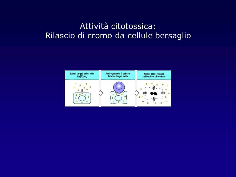 Attività citotossica: Rilascio di cromo da cellule bersaglio