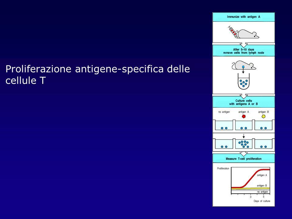 Proliferazione antigene-specifica delle cellule T