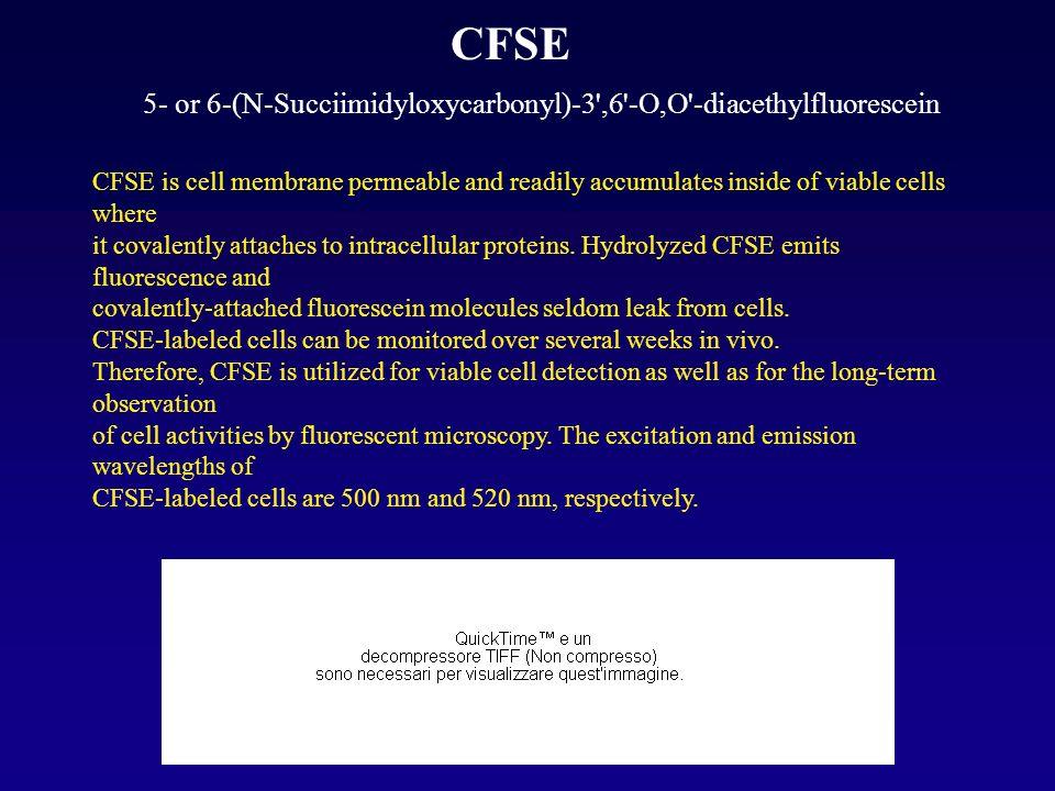 CFSE 5- or 6-(N-Succiimidyloxycarbonyl)-3 ,6 -O,O -diacethylfluorescein.